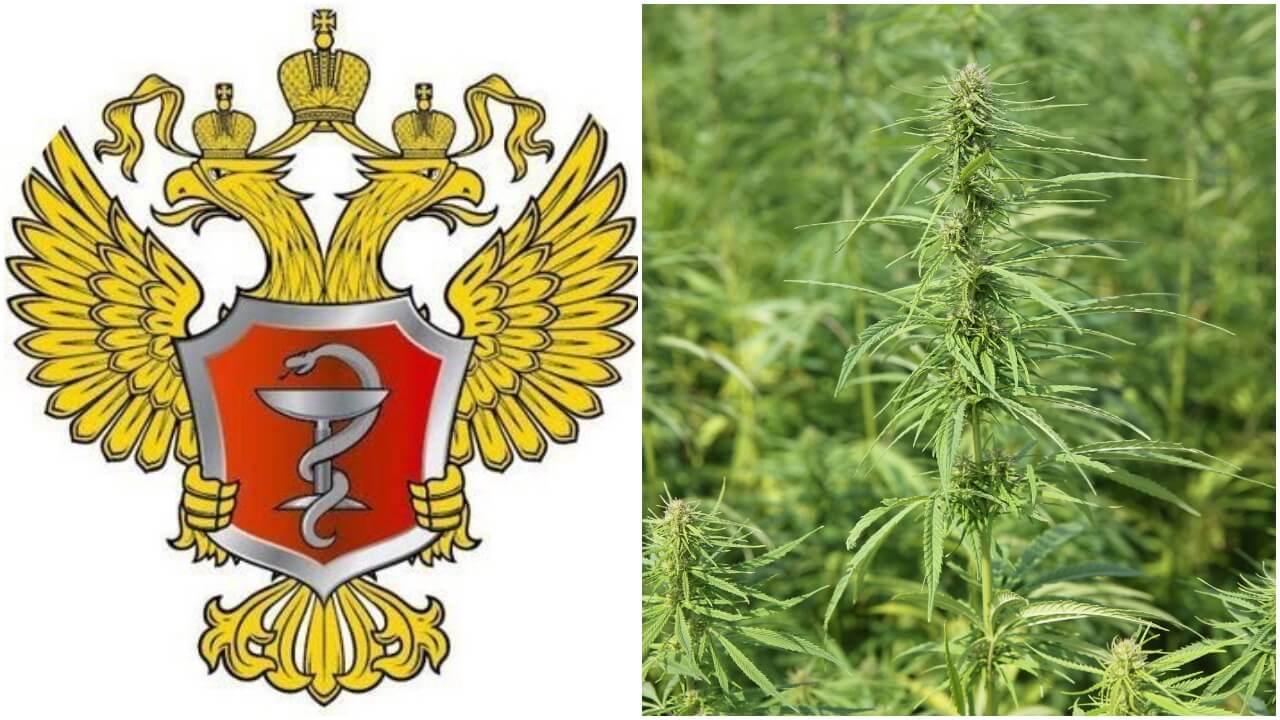 Новости по легализации марихуаны в россии название масла из конопли